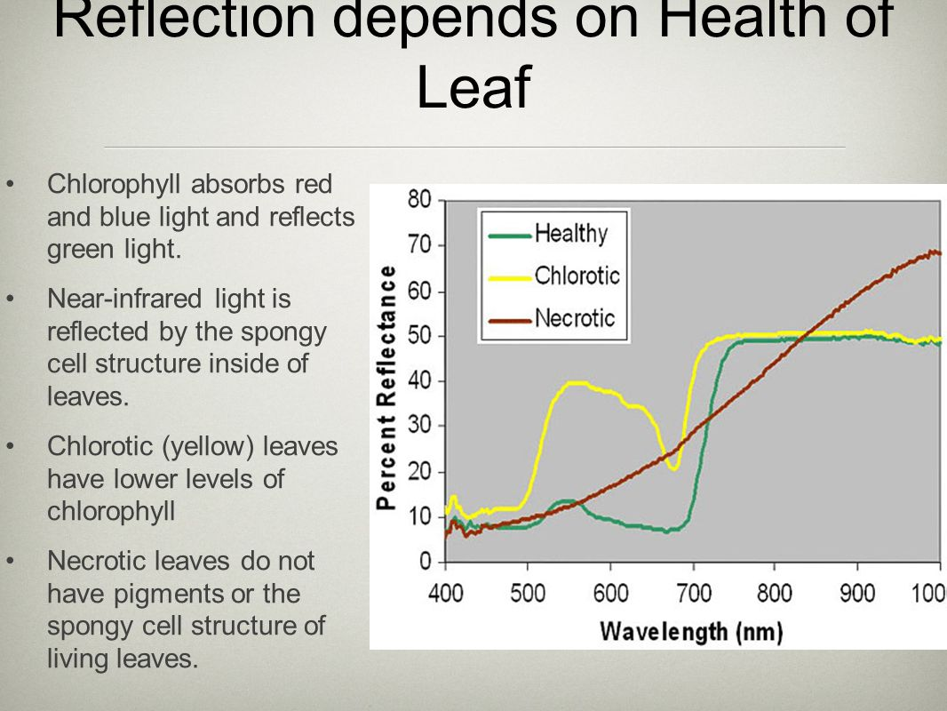 Reflection depends on Health of Leaf