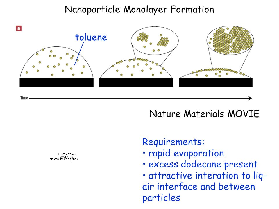 Nanoparticle Monolayer Formation