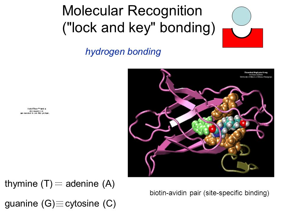 Molecular Recognition ( lock and key bonding)