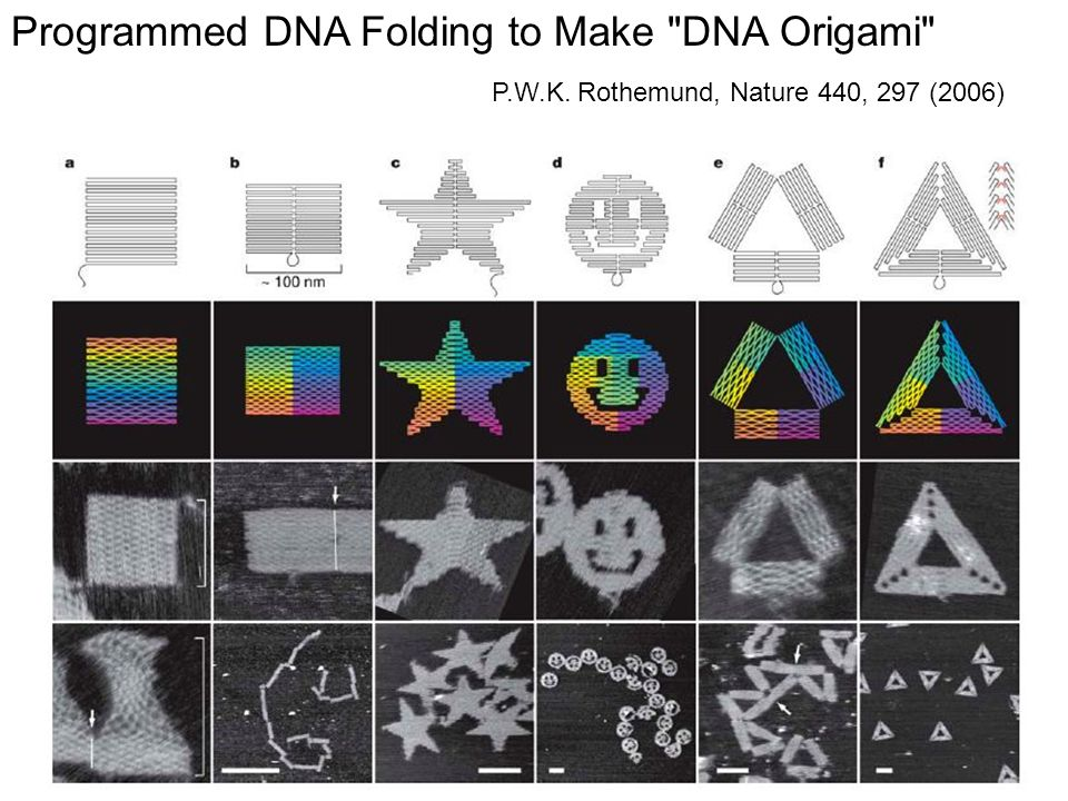 Programmed DNA Folding to Make DNA Origami
