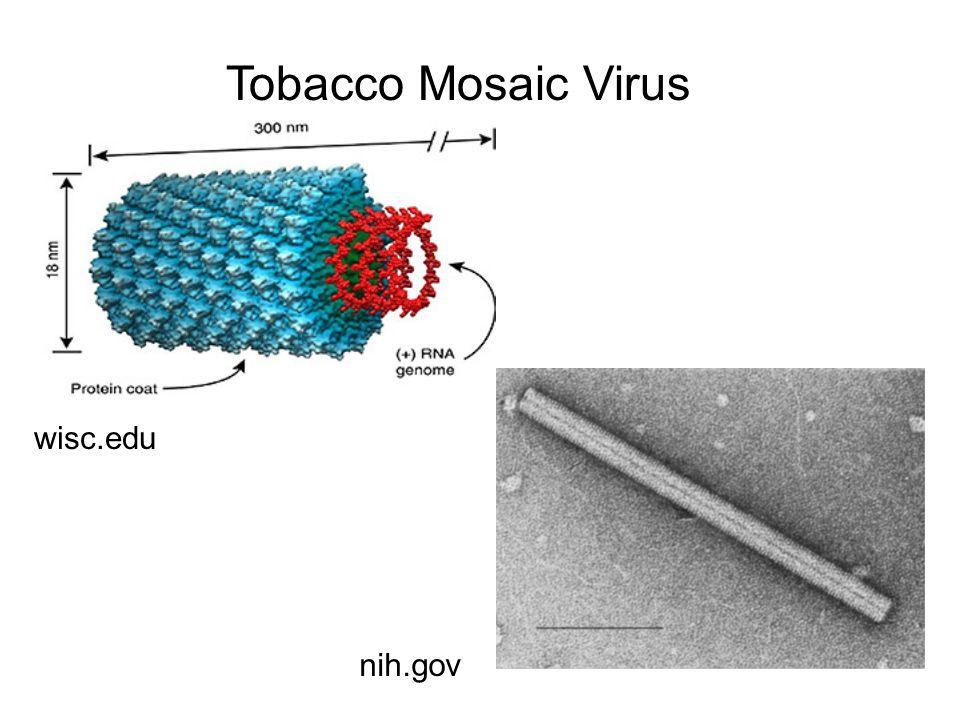 Tobacco Mosaic Virus wisc.edu nih.gov