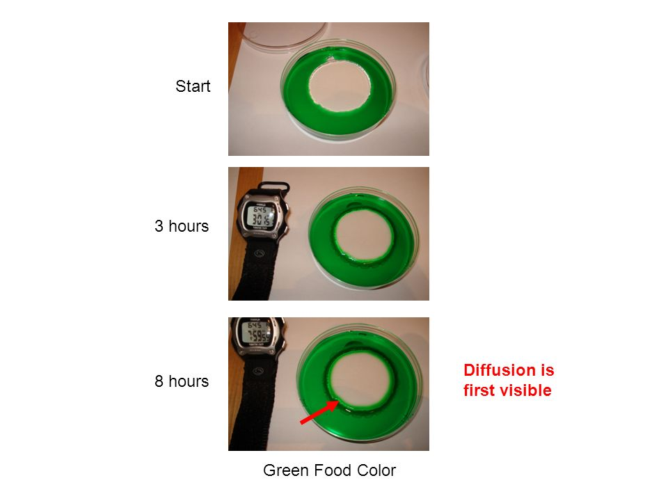 Start 3 hours Diffusion is first visible 8 hours Green Food Color