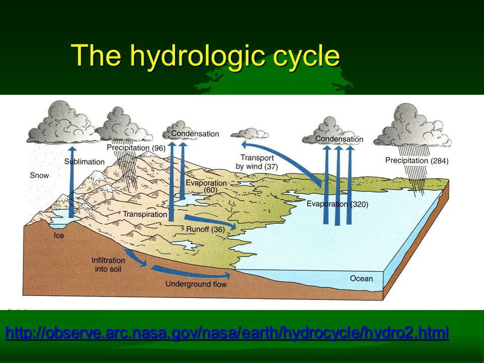 hydrologic cycle Branches chemical hydrology is the study of the chemical characteristics of water ecohydrology is the study of interactions between organisms and the hydrologic cycle.