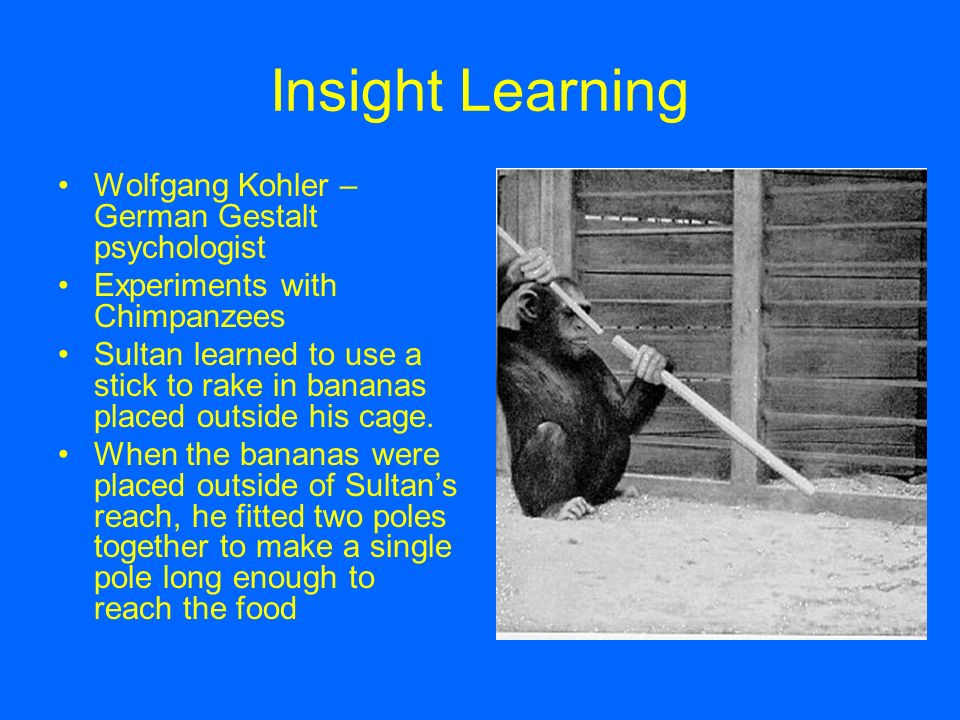 wolfgang kohler s experiment and insight learning The earlier experiments that psychologists had run on dogs and cats differed from kohler's experiments on chimps in two important ways first, the barriers were not familiar to the dogs and cats, and thus there was no opportunity for using latent learning, whereas the chimps were well acquainted with the rooms used in kohler's tests.