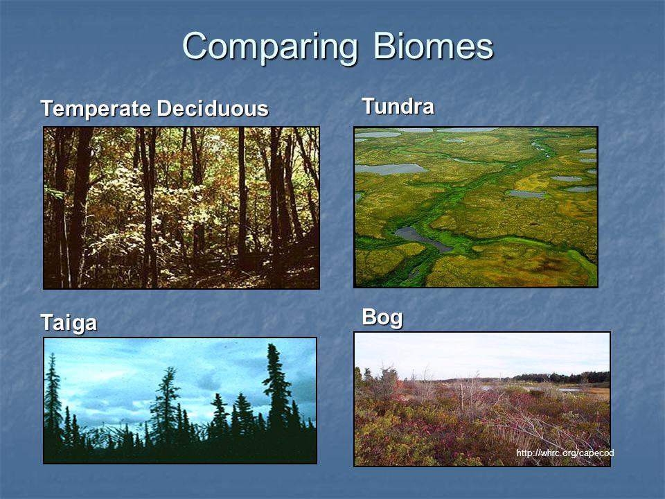 Comparing Biomes Temperate Deciduous Tundra Bog Taiga