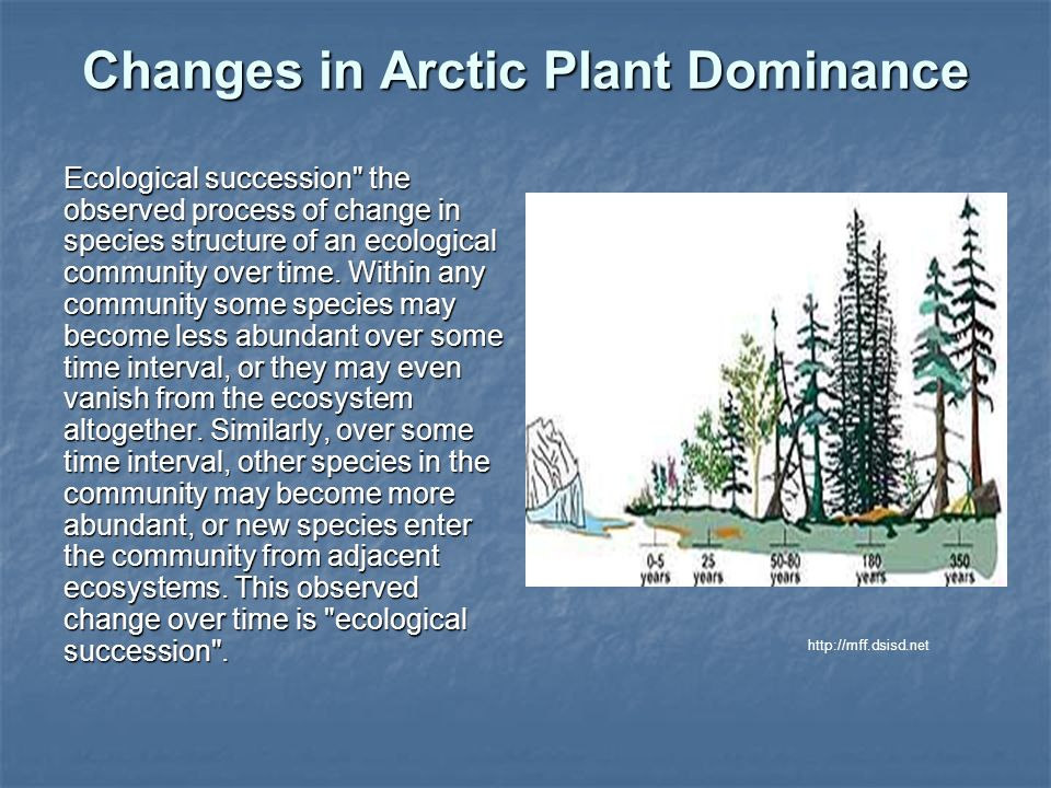 Changes in Arctic Plant Dominance