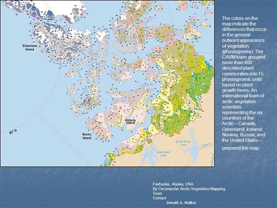 The colors on the map indicate the differences that occur in the general outward appearance of vegetation (physiognomy). The CAVM team grouped more than 400 described plant communities into 15 physiognomic units based on plant growth forms. An international team of arctic vegetation scientists representing the six countries of the Arctic—Canada, Greenland, Iceland, Norway, Russia, and the United States—prepared the map.