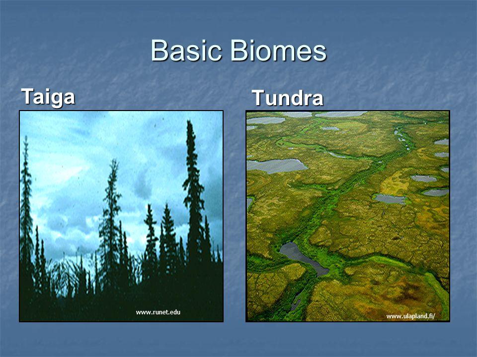 Basic Biomes Taiga Tundra www.runet.edu www.ulapland.fi/