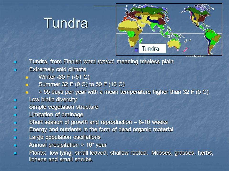 Tundra Tundra. www.mbgnet.net. Tundra, from Finnish word tunturi, meaning treeless plain. Extremely cold climate.