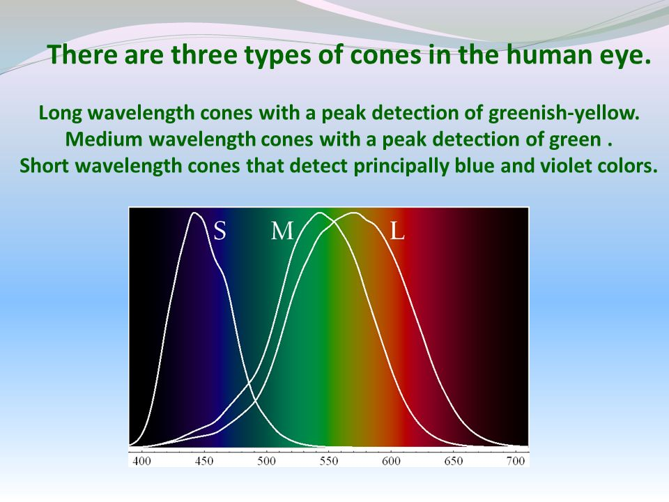 There are three types of cones in the human eye