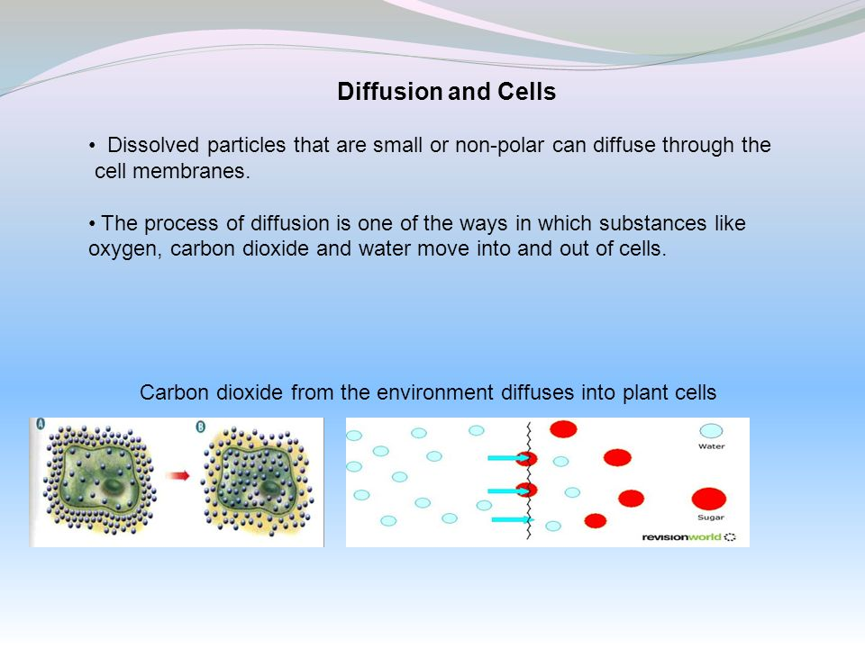 Carbon dioxide from the environment diffuses into plant cells