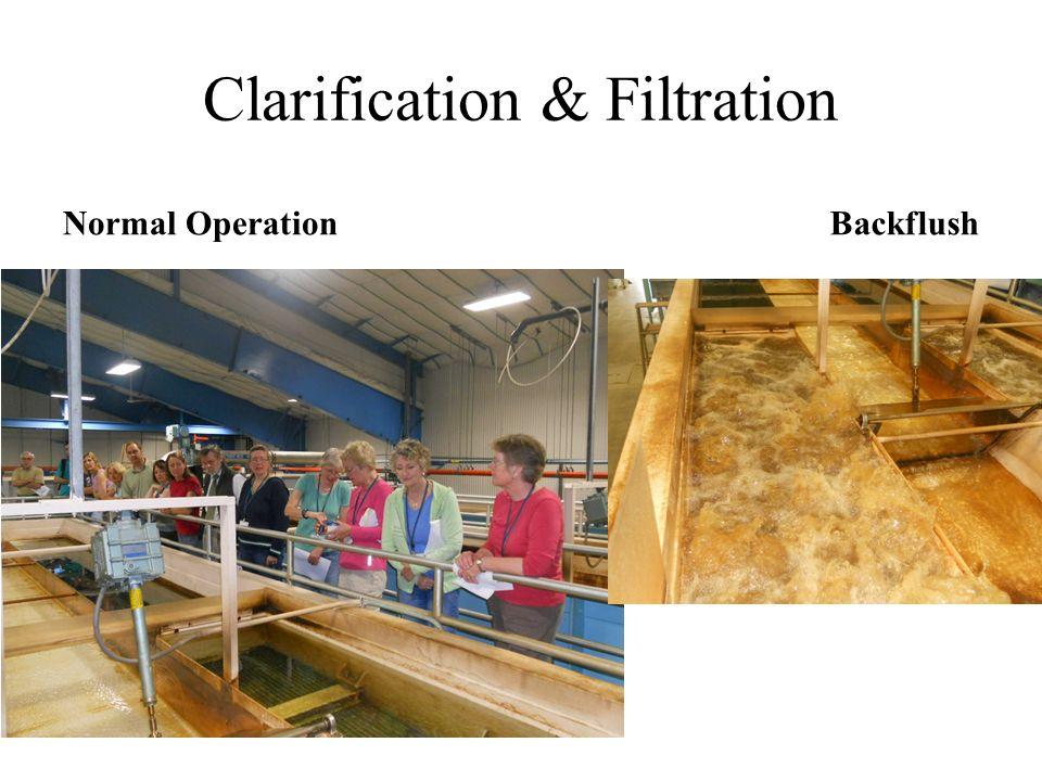 Clarification & Filtration