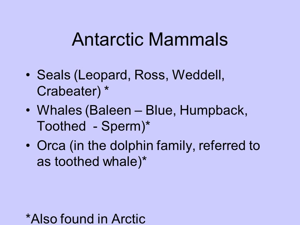 Antarctic Mammals Seals (Leopard, Ross, Weddell, Crabeater) *