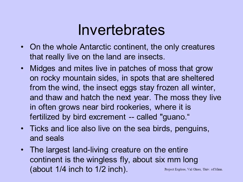Invertebrates On the whole Antarctic continent, the only creatures that really live on the land are insects.
