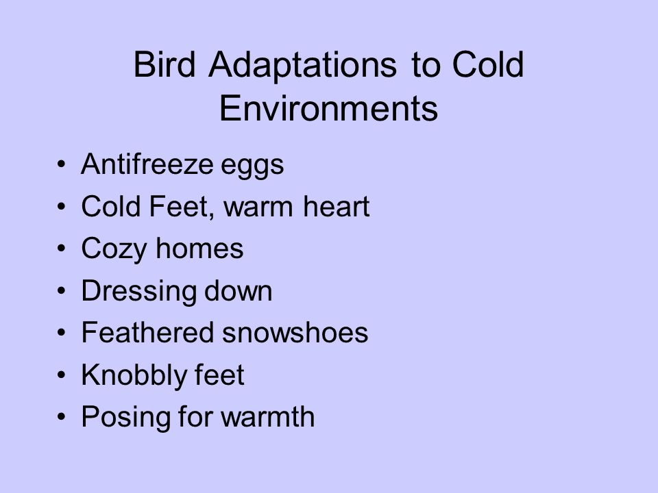 Bird Adaptations to Cold Environments