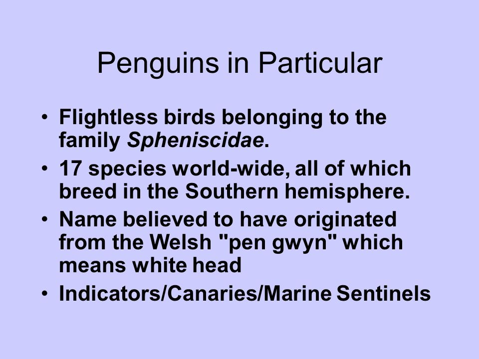 Penguins in Particular