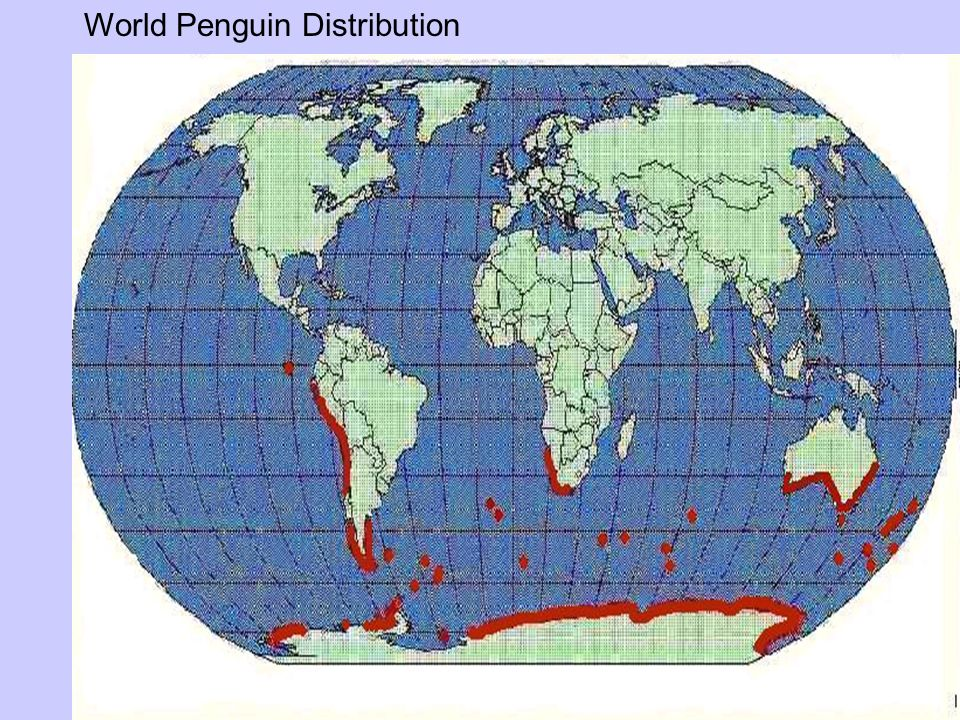 World Penguin Distribution