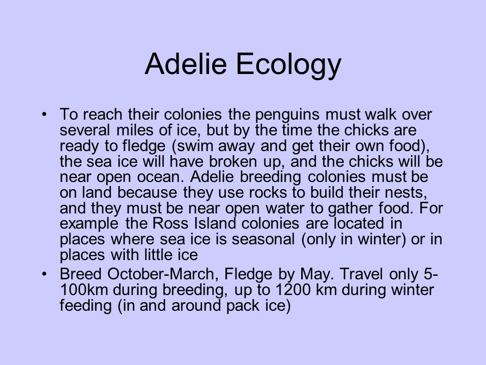 Adelie Ecology