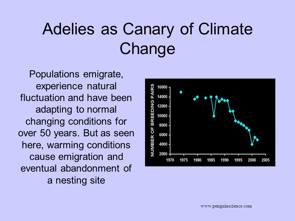 Adelies as Canary of Climate Change