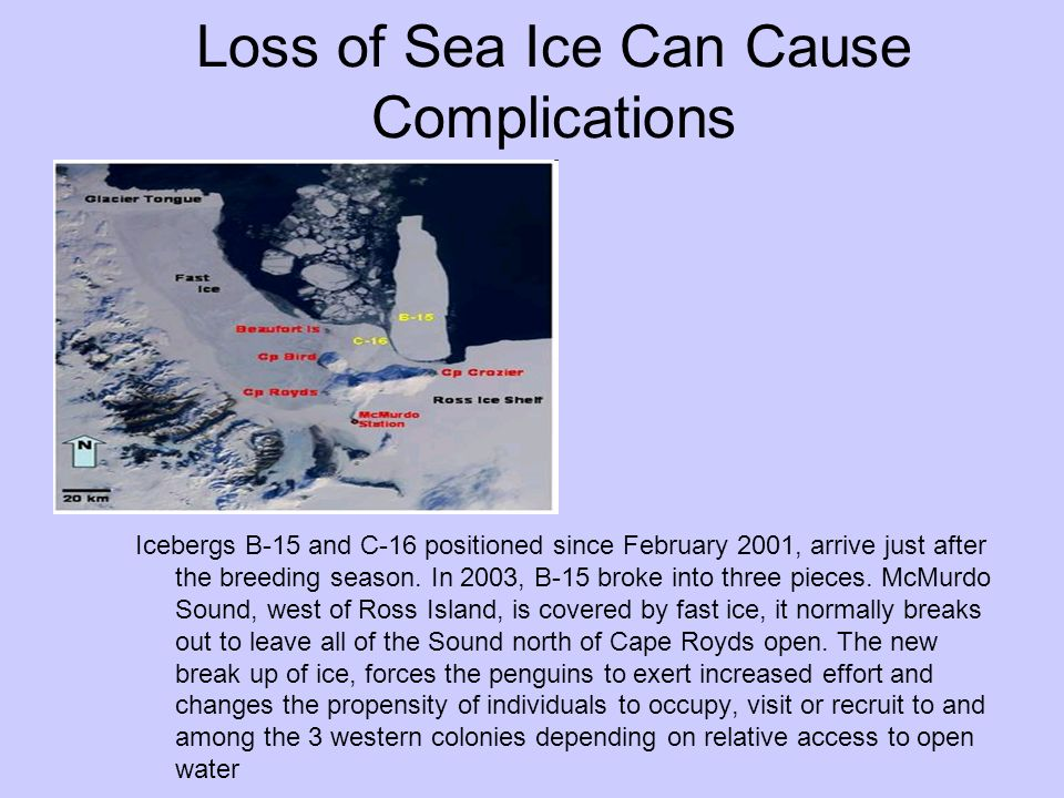 Loss of Sea Ice Can Cause Complications
