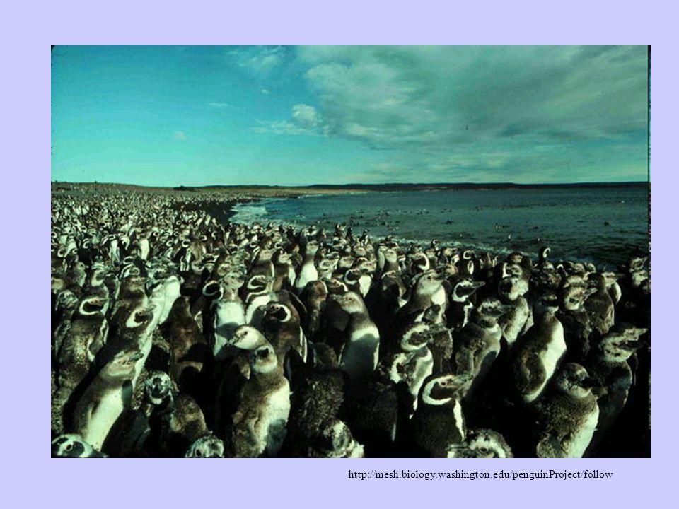 http://mesh.biology.washington.edu/penguinProject/follow