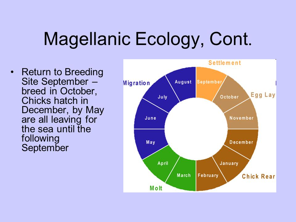 Magellanic Ecology, Cont.