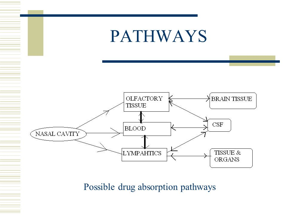 Possible drug absorption pathways