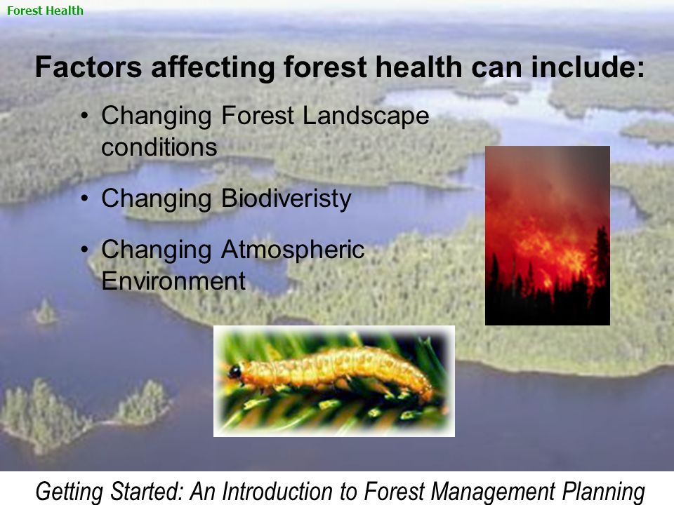 Factors affecting forest health can include: