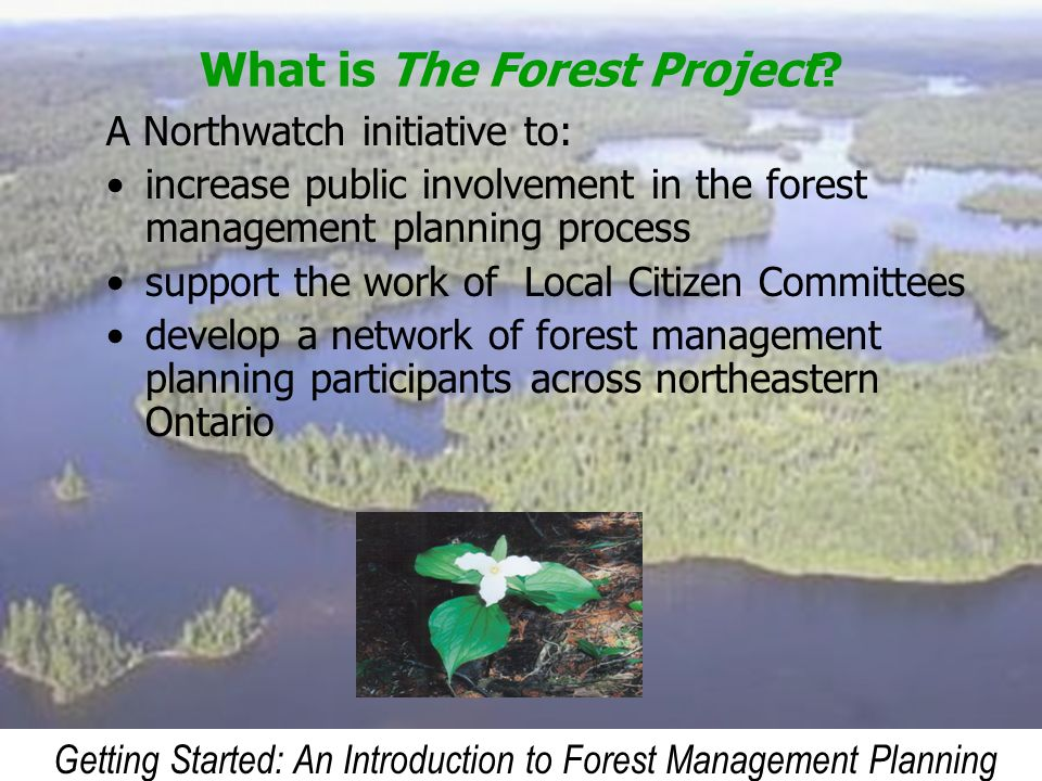 What is The Forest Project