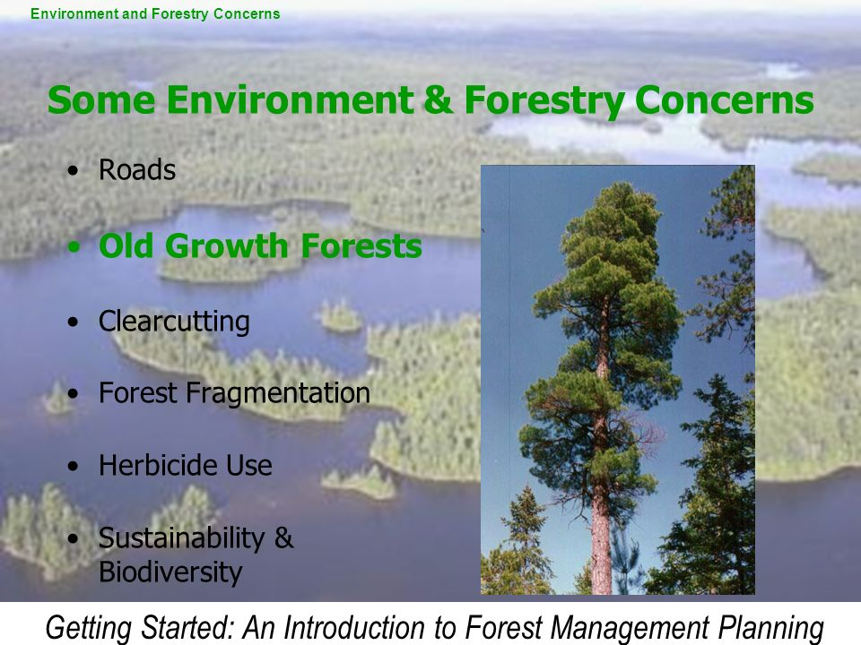 Some Environment & Forestry Concerns