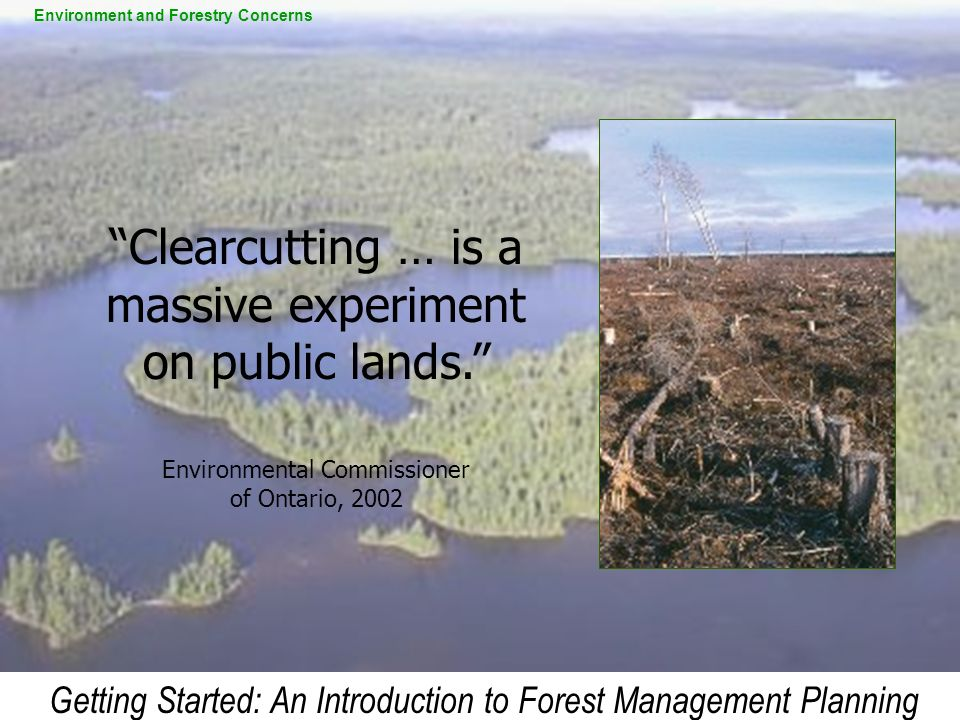 Clearcutting … is a massive experiment on public lands.
