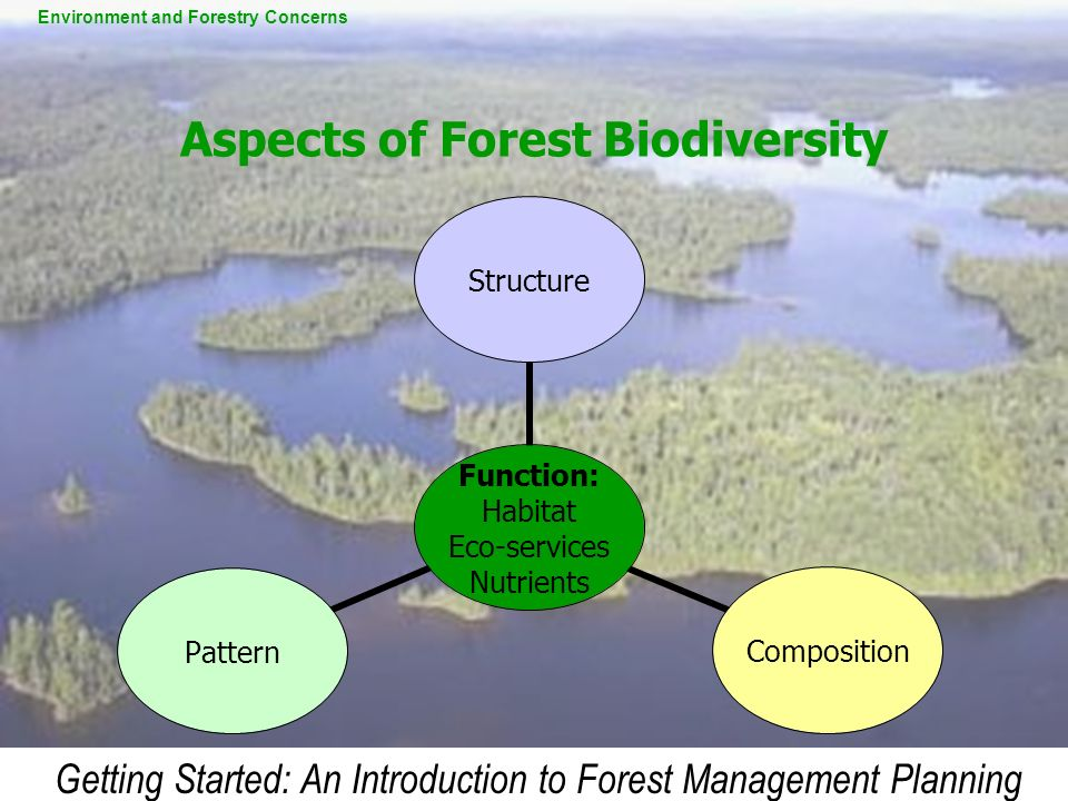 Aspects of Forest Biodiversity