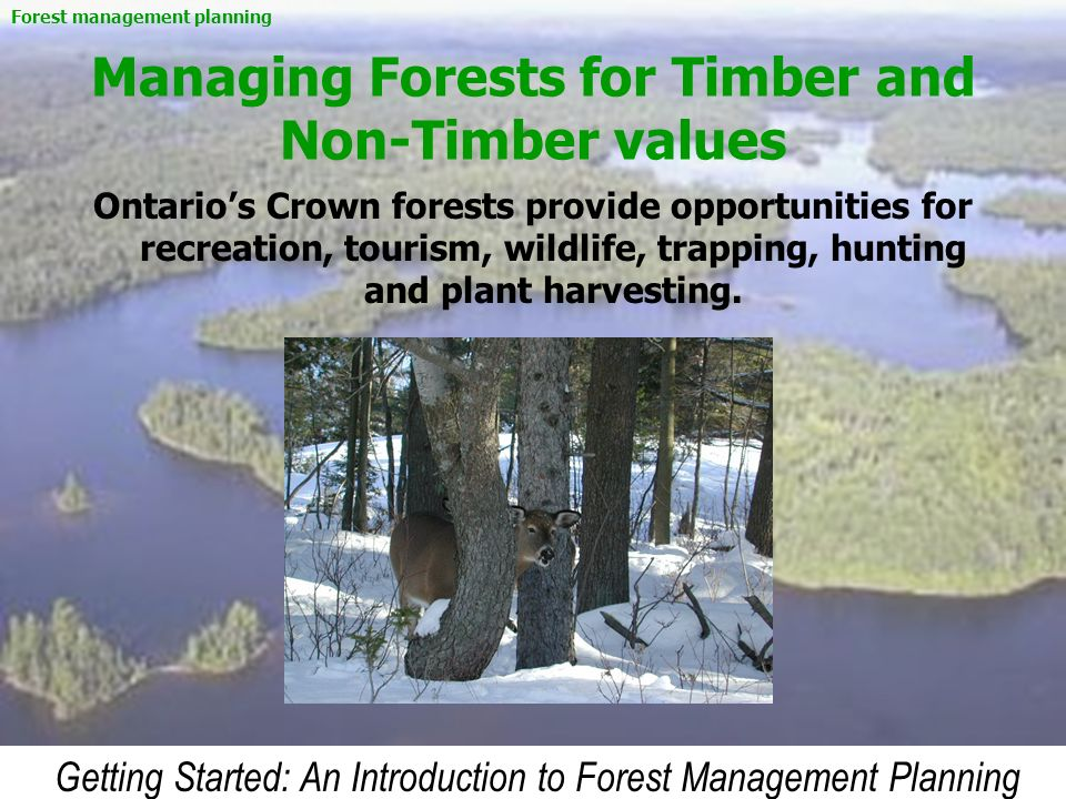 Managing Forests for Timber and Non-Timber values
