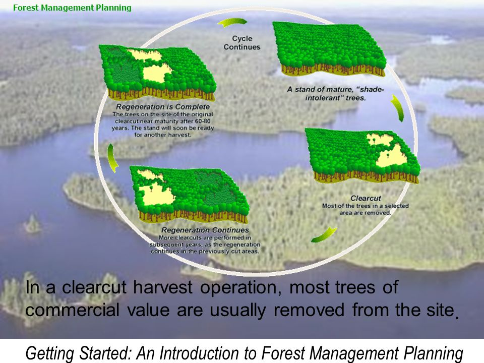 Getting Started: An Introduction to Forest Management Planning
