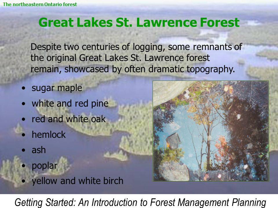 Great Lakes St. Lawrence Forest