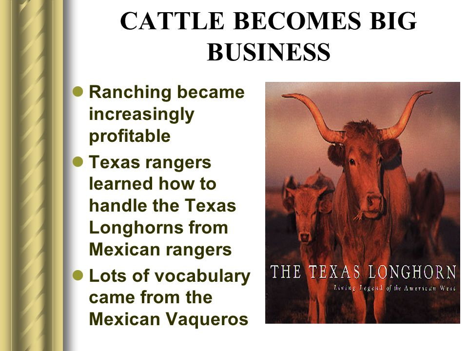 CATTLE BECOMES BIG BUSINESS