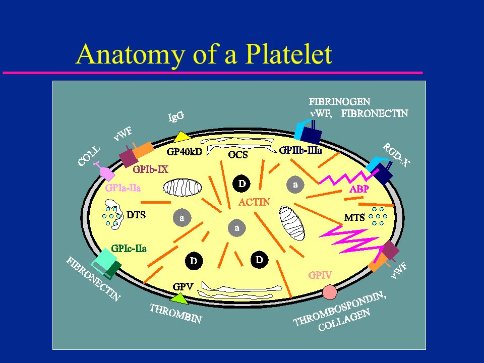 Anatomy of a Platelet