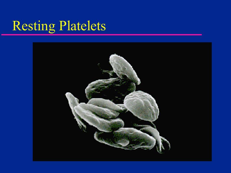 Resting Platelets