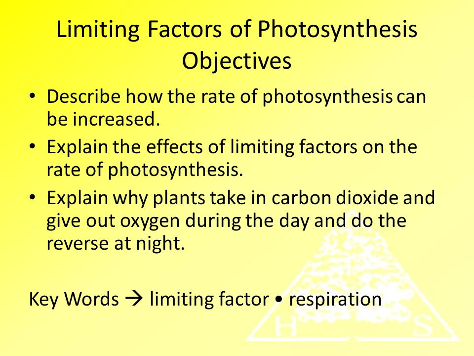 Limiting Factors of Photosynthesis Objectives - ppt video online ...