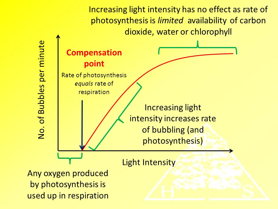 the effect of light intensity can affect the rate of photosynthesis Lab 5 photosynthesis: why do temperature and light intensity affect the rate of photosynthesis in to investigate the effect of light intensity on photosynthesis.