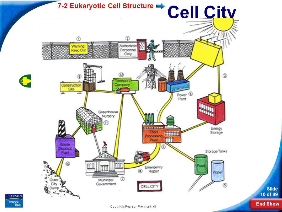 cell diagram prentice hall science worksheets cell best free printable worksheets. Black Bedroom Furniture Sets. Home Design Ideas