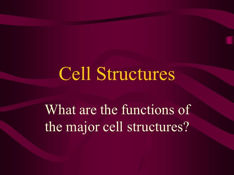 What are the functions of the major cell structures
