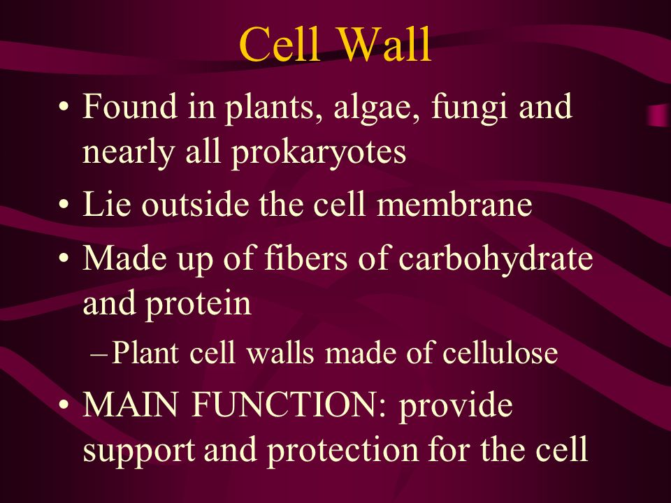 Cell Wall Found in plants, algae, fungi and nearly all prokaryotes