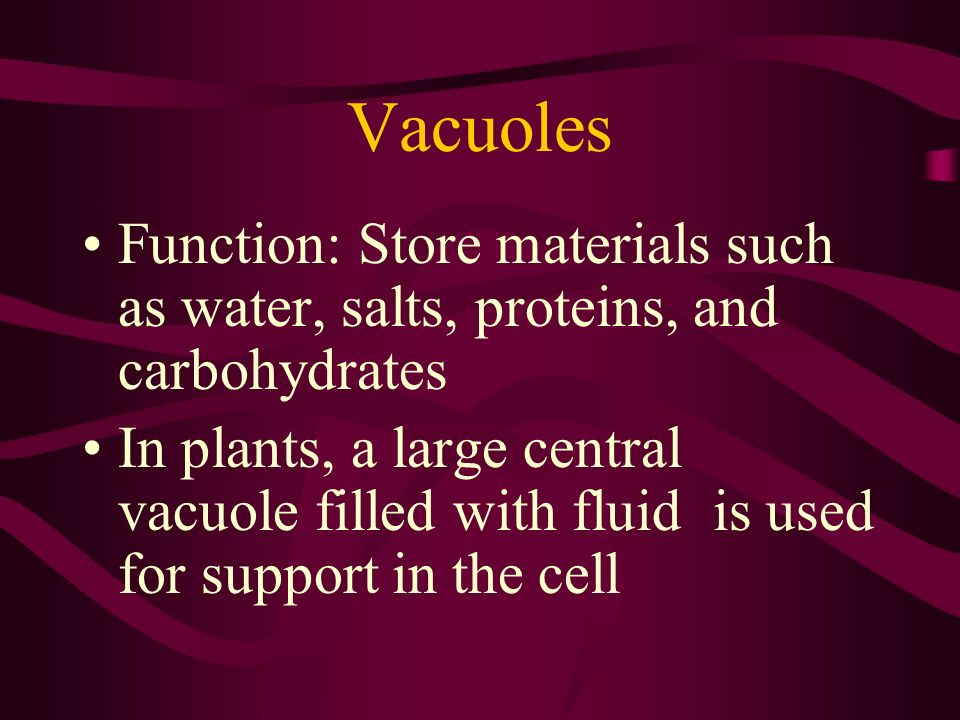 Vacuoles Function: Store materials such as water, salts, proteins, and carbohydrates.