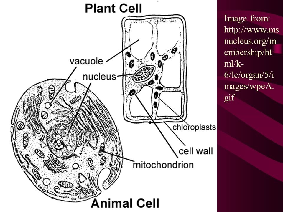Image from:   msnucleus