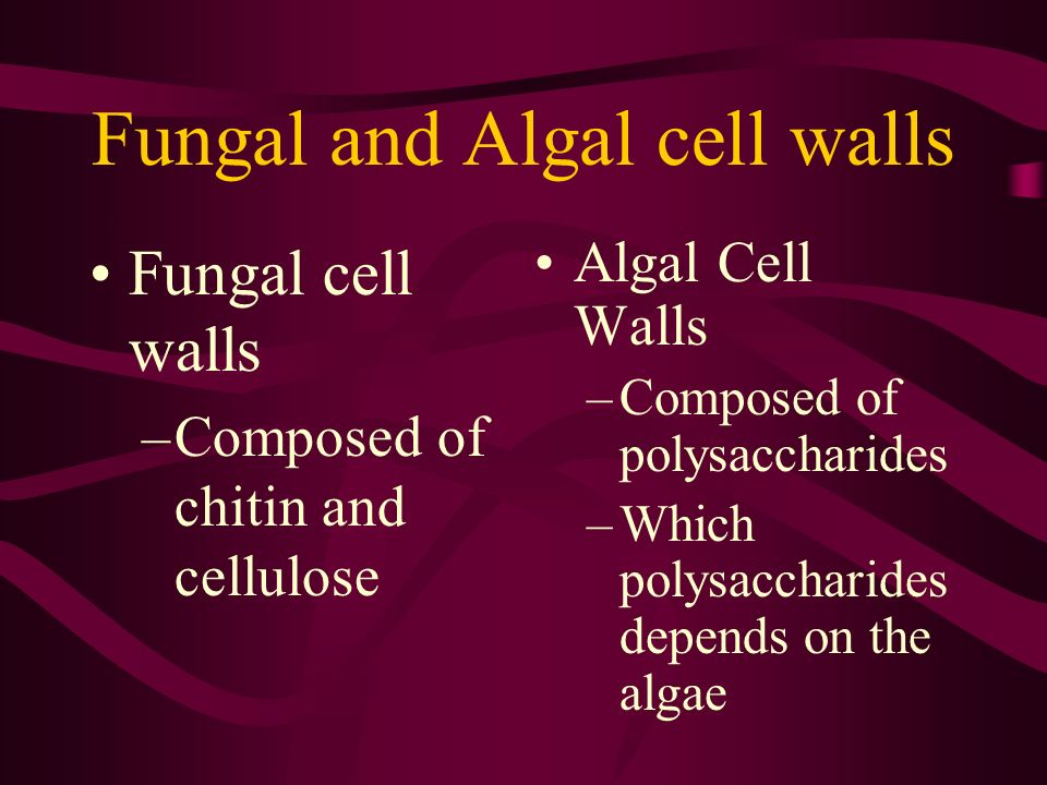 Fungal and Algal cell walls