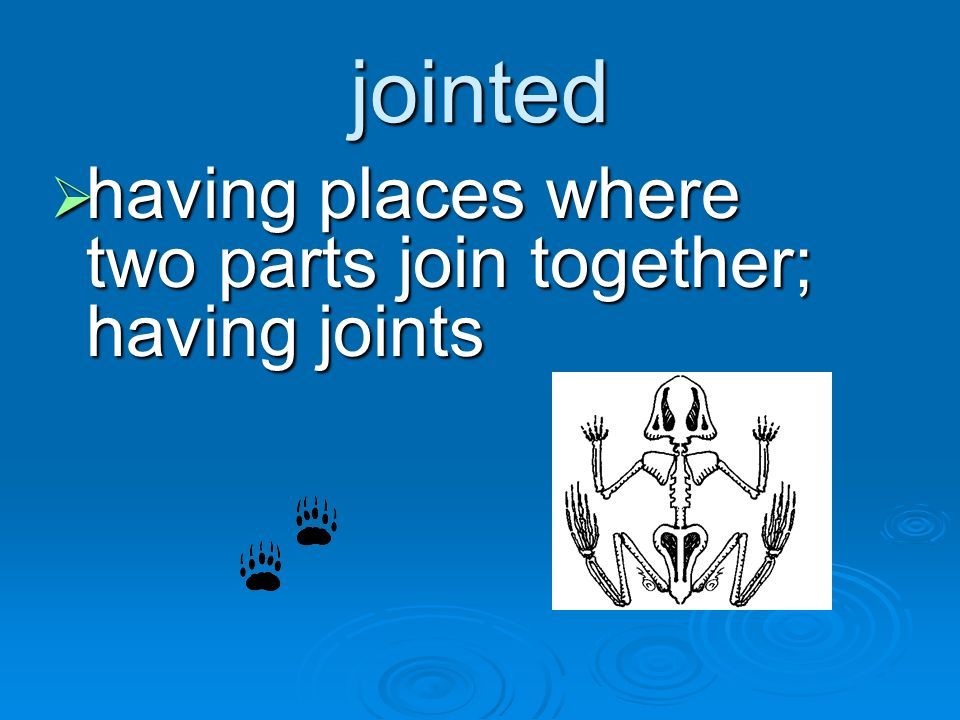 jointed having places where two parts join together; having joints