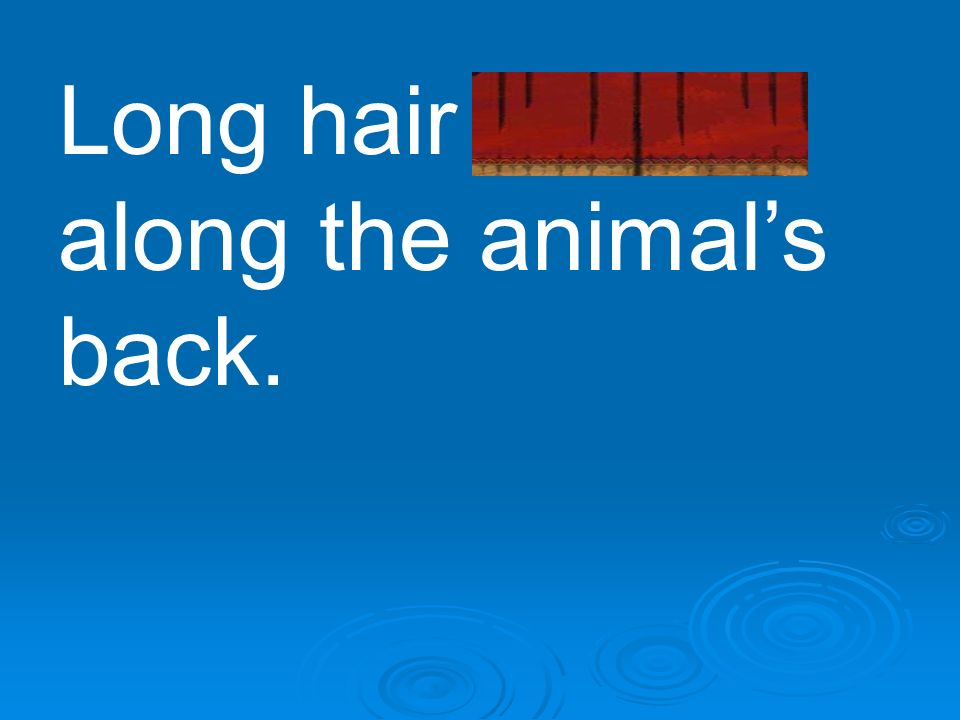Long hair bristled along the animal's back.