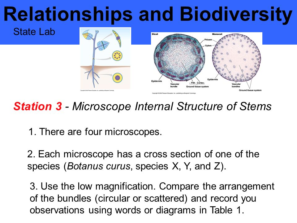 relationship and biodiversity lab ppt