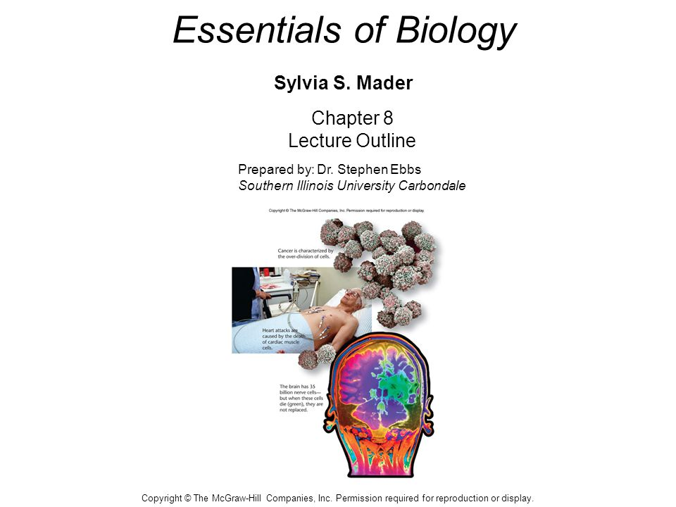 Essentials of biology sylvia s mader ppt video online download essentials of biology sylvia s mader fandeluxe Choice Image